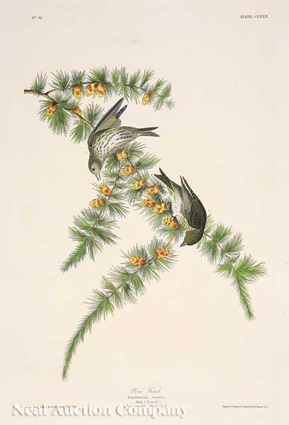 John James Audubon, Pine Finch from Birds of America, Havell edition
