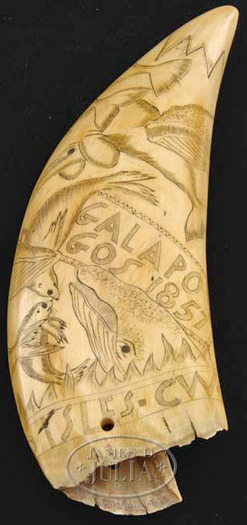 Antique Whale Tooth Scrimshaw | Macefemixo