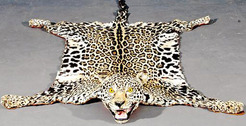 Taxidermy Leopard Rug Hide Amp Head Fabric Backed 7 Ft